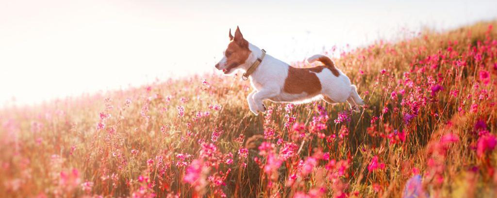 Mit VitaCanisindividuell auf deinen Hund abgestimmtes Training
